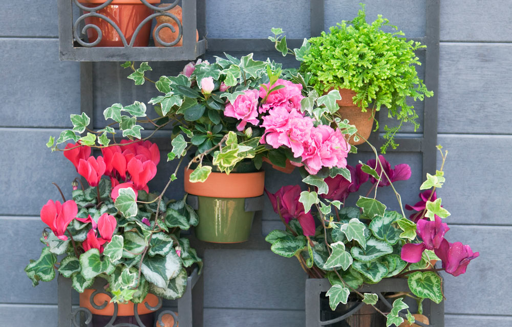 Potted colour for the cooler months in your garden Better homes and gardens episode last night