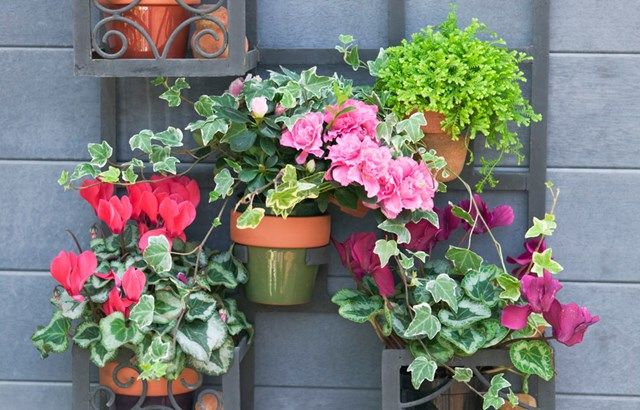 Potted Colour For The Cooler Months In Your Garden