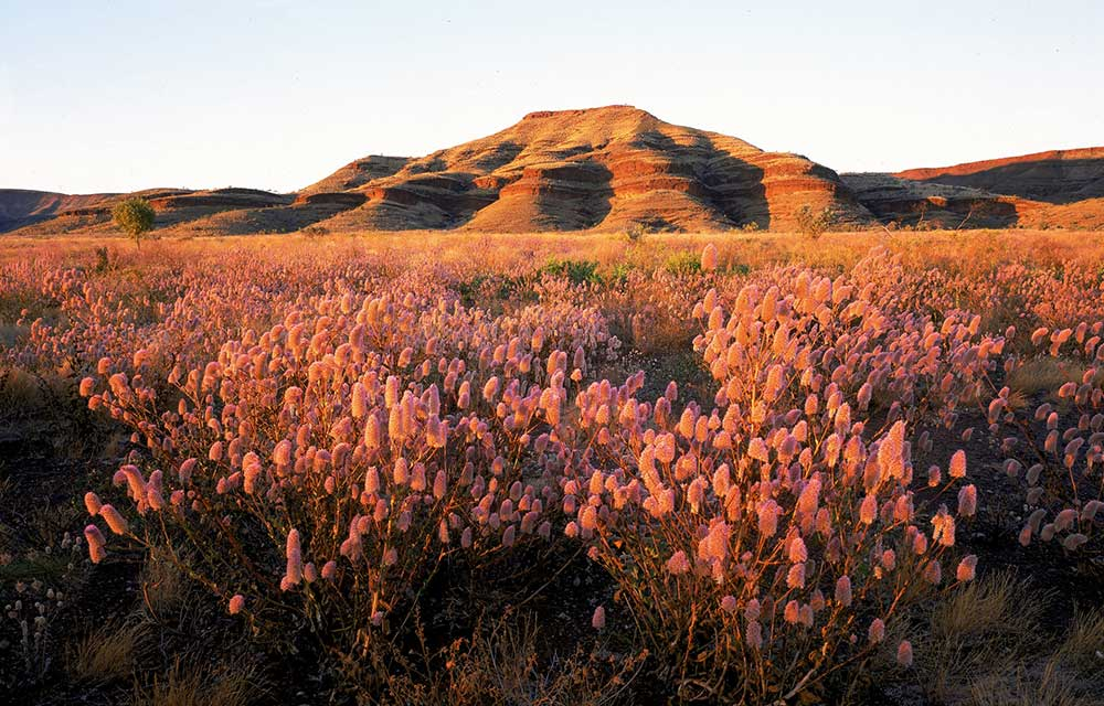 Western australia 39 s wildflower season starts now better Bhg australia