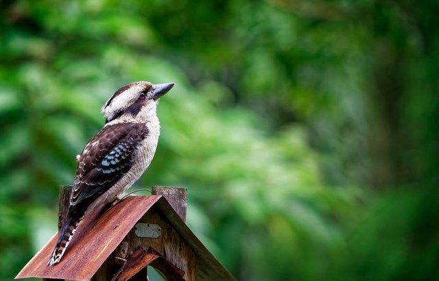 How to attract wildlife to your backyard | Better Homes ...