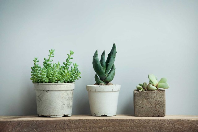 Gorgeous ways to decorate with succulents