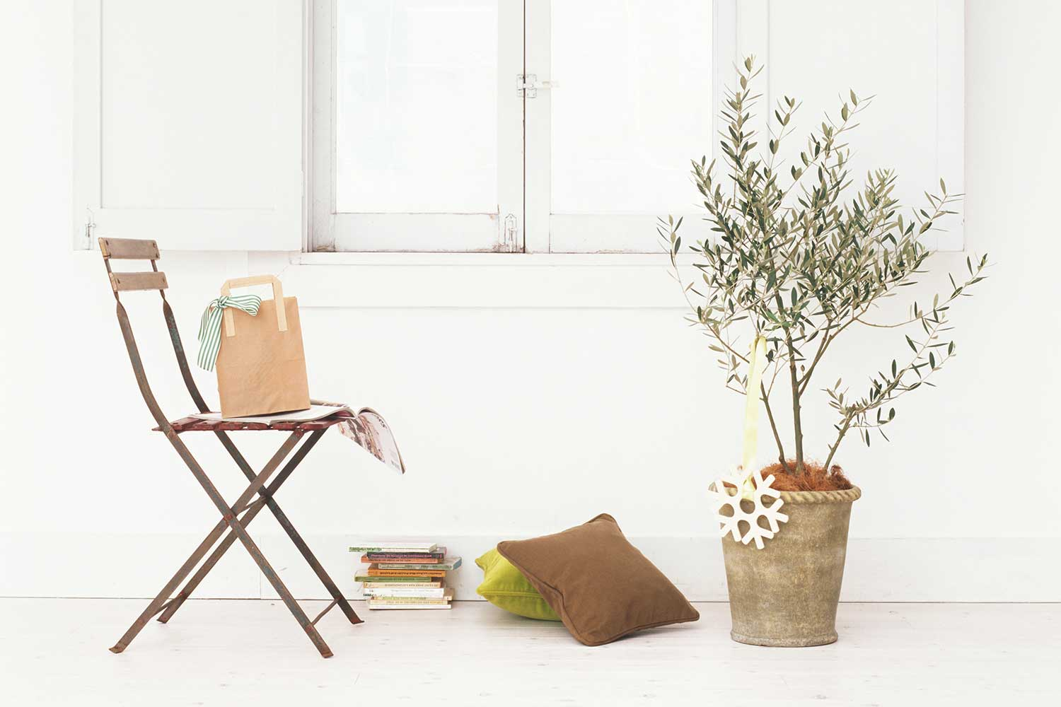 How to care for an indoor olive tree better homes and for Olive plant care