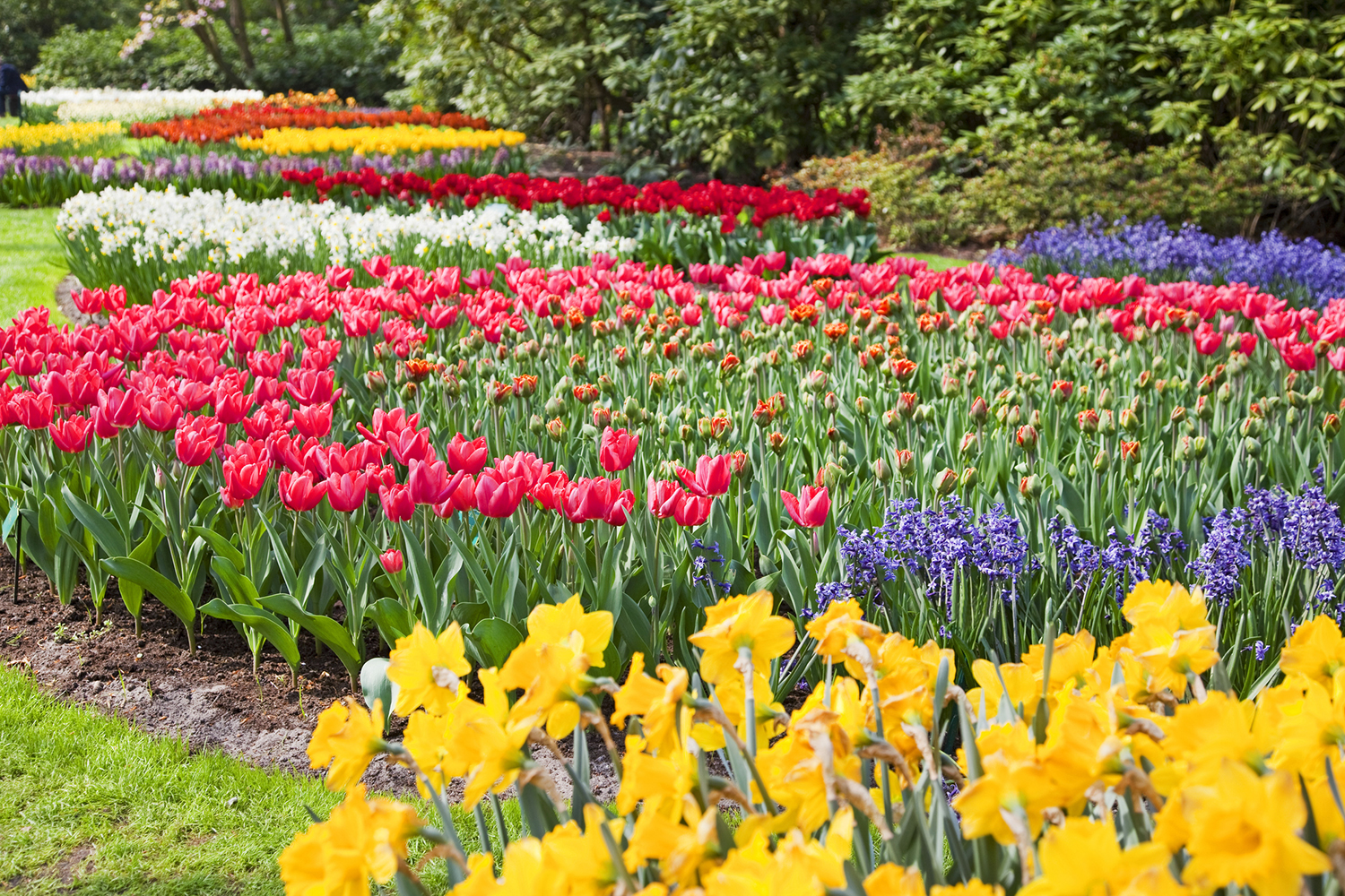 Spring Bulb Inspiration Better Homes And Gardens