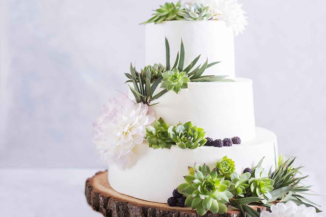 6 succulent cakes that look too good to eat