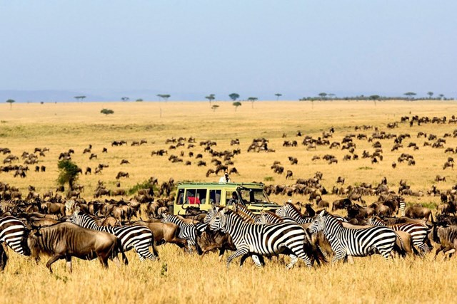 Follow the great migration in Africa
