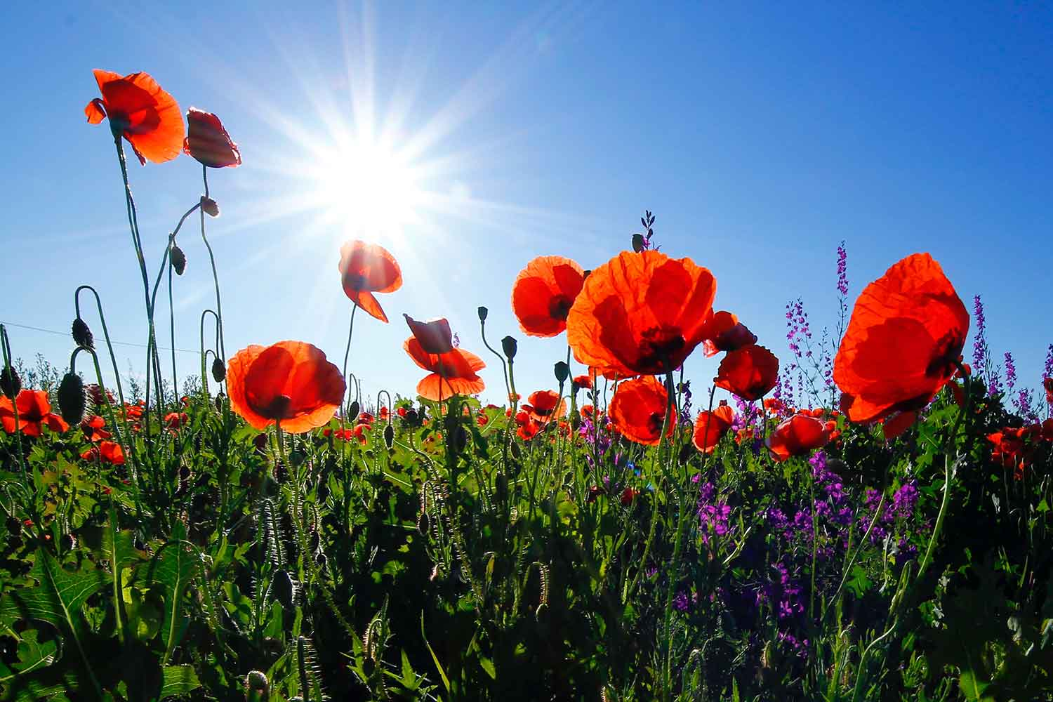 Knitters Wanted To Create Poppies For Remembrance Day War