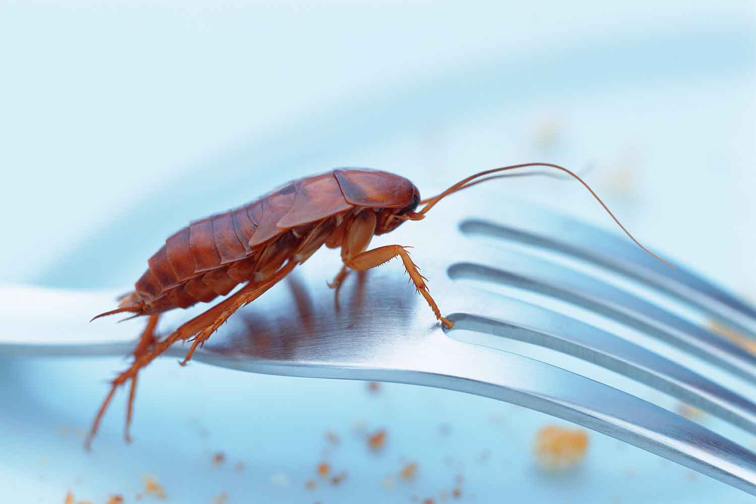 How to get rid of pests in your kitchen | Better Homes and Gardens