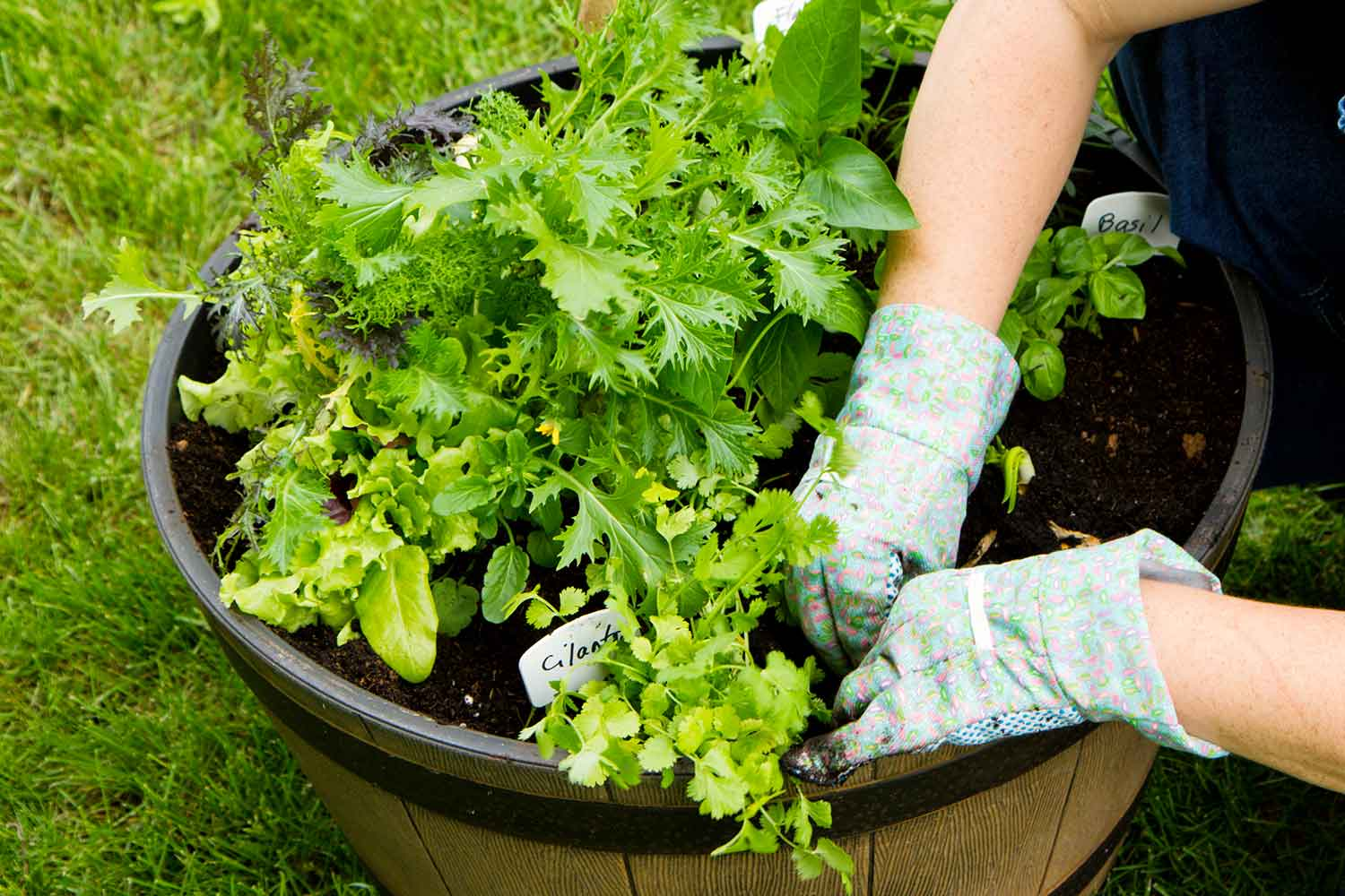5 tips for container gardening better homes and gardens Better homes and gardens episode last night