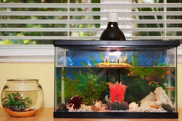 Make cleaning your fish tank easy with these clever hacks | Better