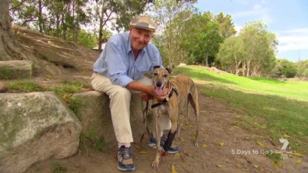 Greyhound Rescue The Heartwarming Story Of Millie