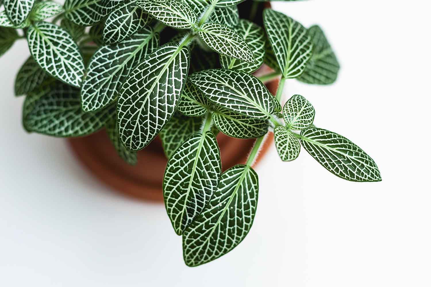 The Best Way To Get Rid Of Gnats In Houseplants