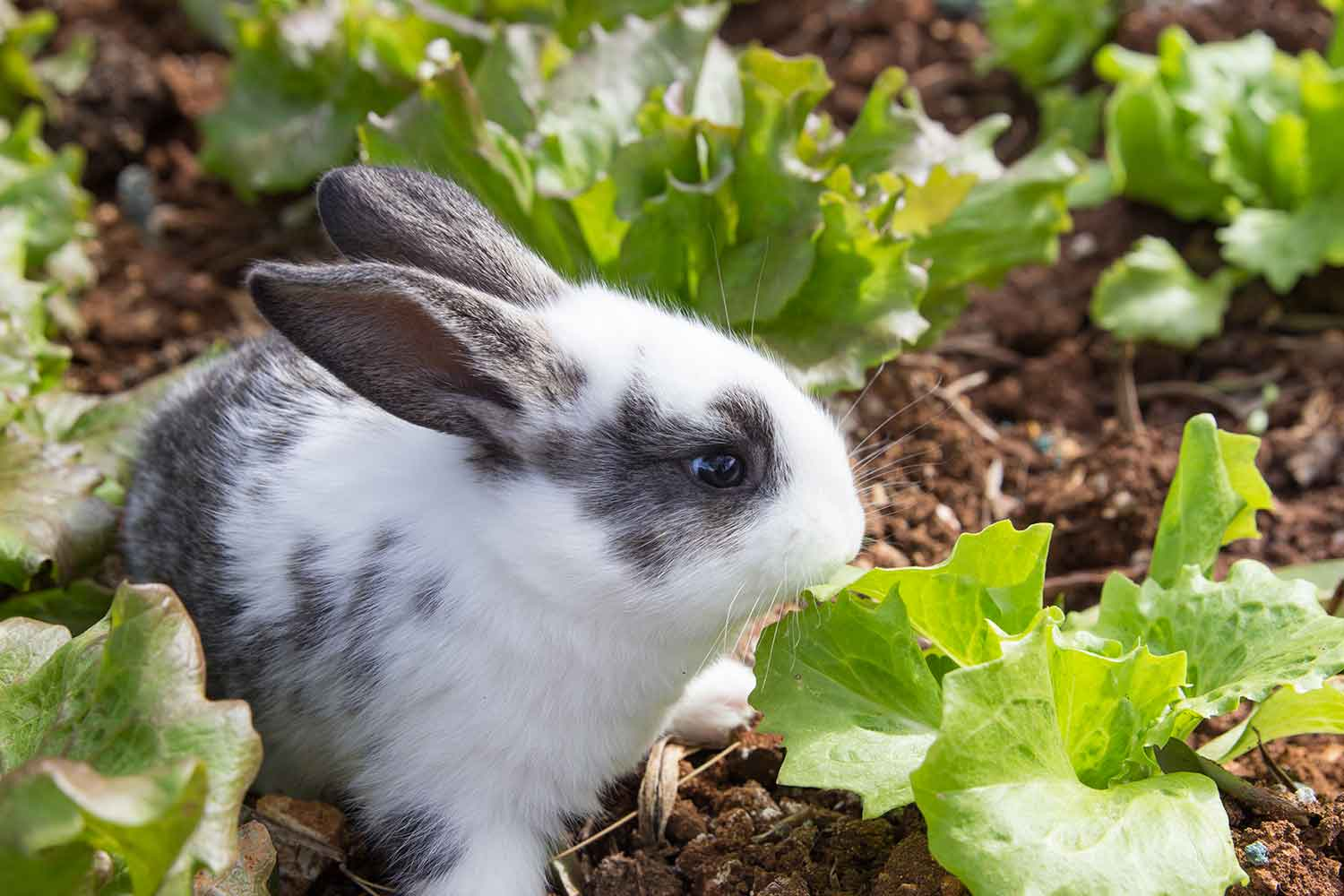 How to keep rabbits from eating your plants better homes for Better homes and gardens australia episodes