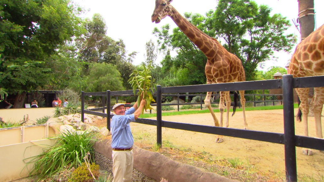 Adelaide Zoo Keeper For A Day Program Better Homes And