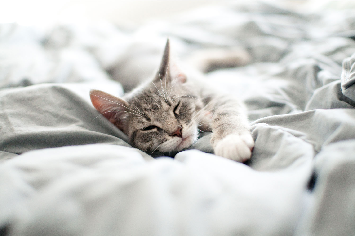 Why You Shouldn T Let Your Cat Sleep In Bed With You