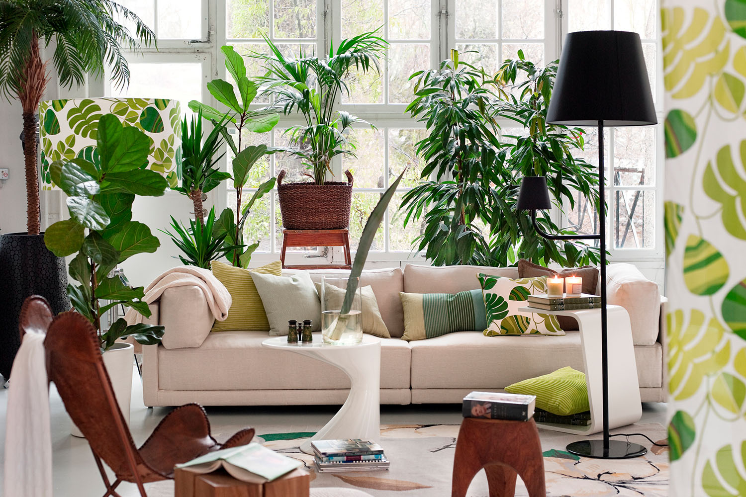 This Is How Many Plants You Need Per Room According To Science | Better  Homes And Gardens