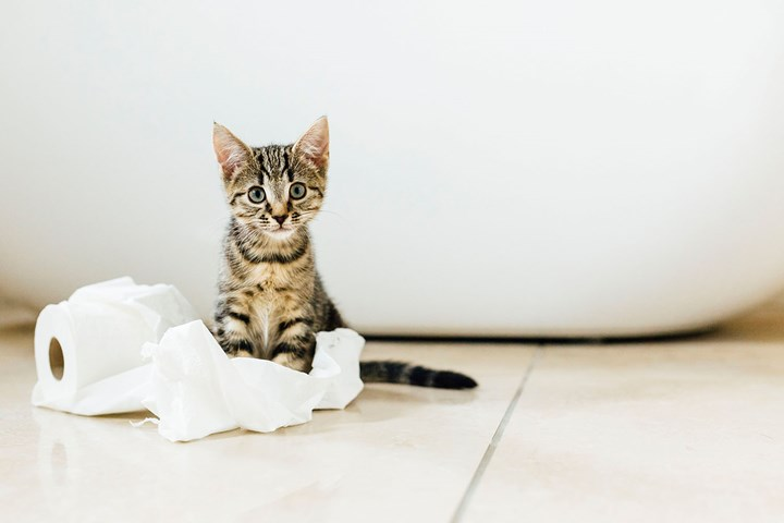 Leaving a kitten alone for a weekend