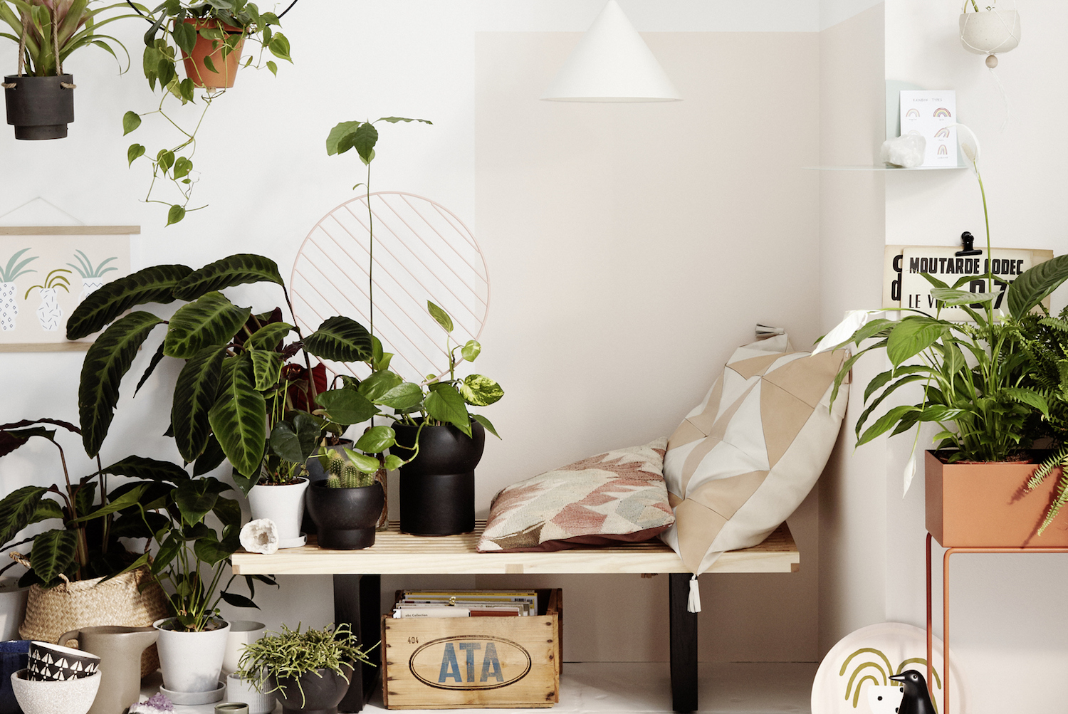 Indoor Plants: 10 Best House Plants