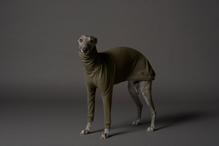 New Melbourne fashion brand makes dog jumpers for whippets