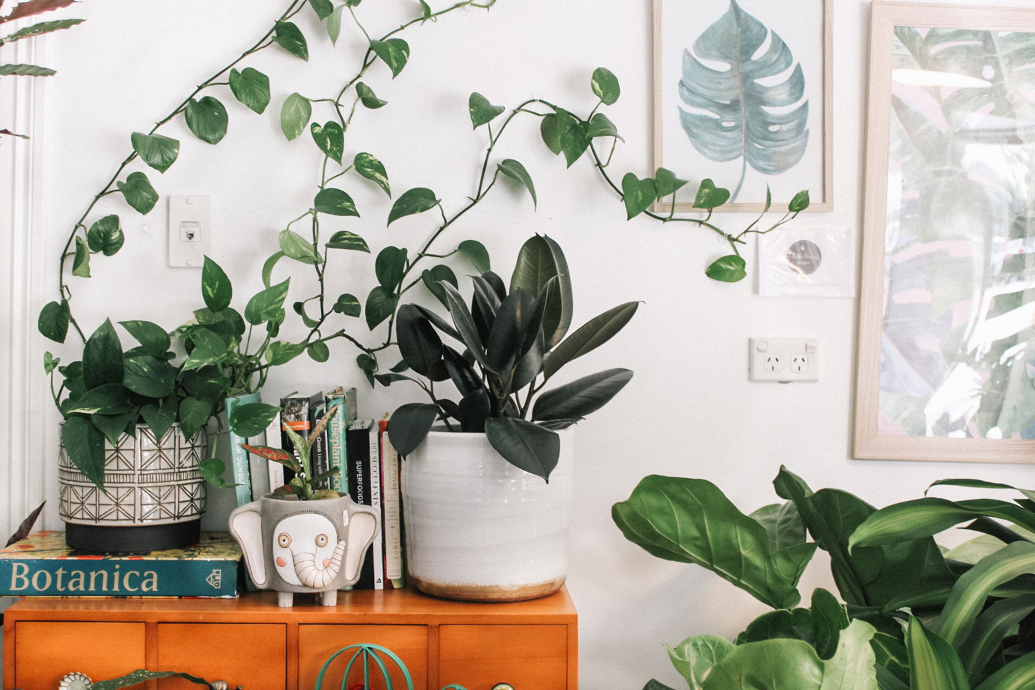 Air Purifying Plants: 20 Best Air Cleaning Plants