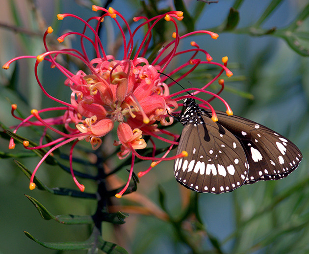 How To Attract Butterflies Better Homes And Gardens