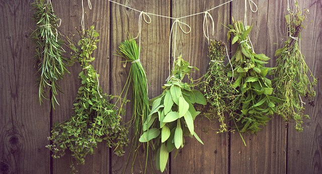 A guide to growing herbs better homes and gardens Better homes and gardens planting guide