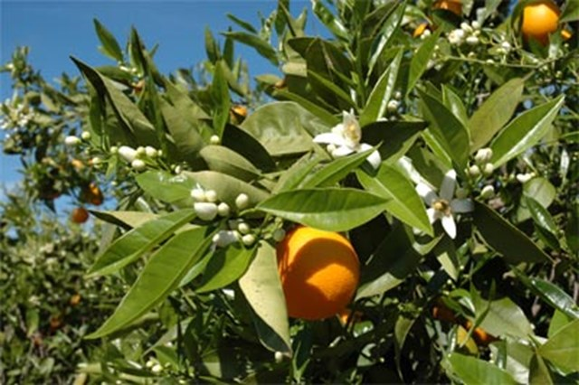 How To Care for Fruit Trees