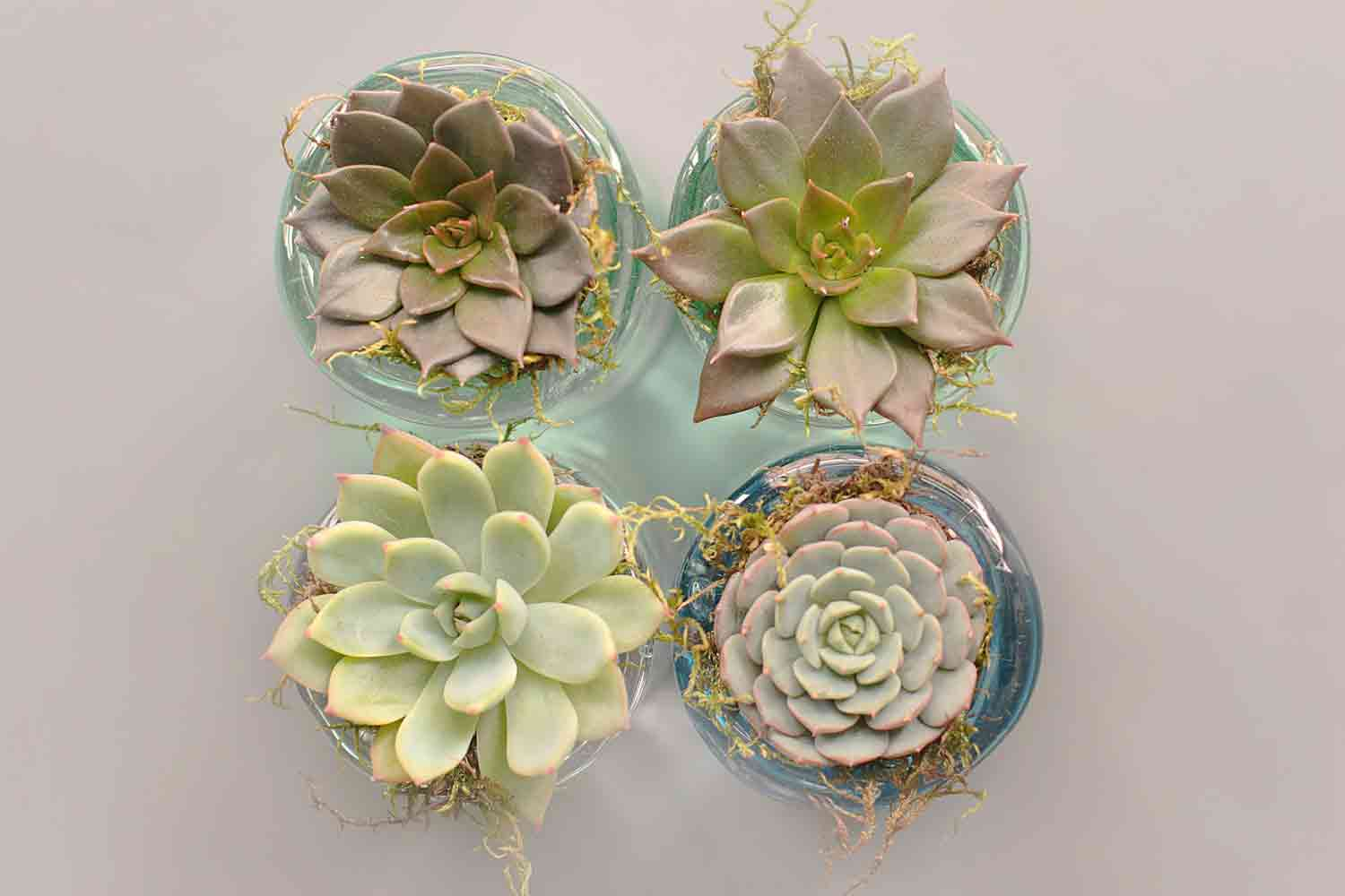 Succulent Cuttings: How to Grow Succulents from Cuttings | Better