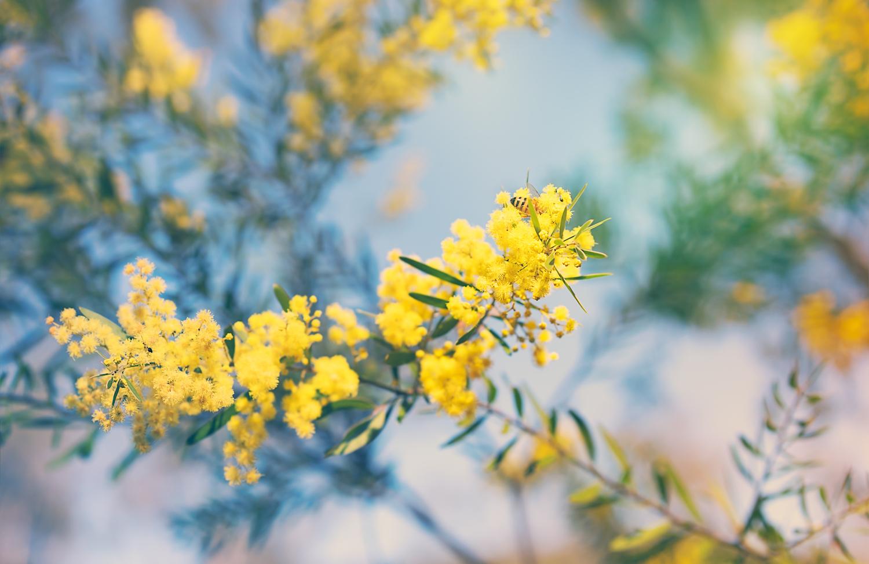 australian native flowers  a guide to australian flowers