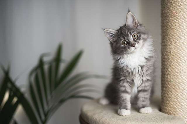 The common household item that's poisoning your cat