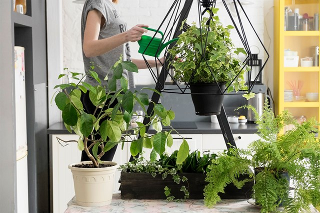 Filling your house with plants increases joy and life expectancy, study says