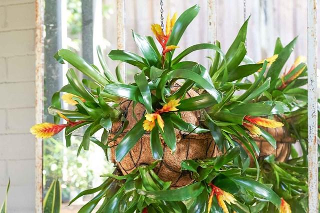 How to make a bromeliad bauble
