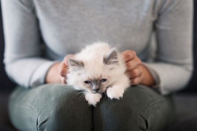 Scientists have created a vaccine that could put an end to cat allergies
