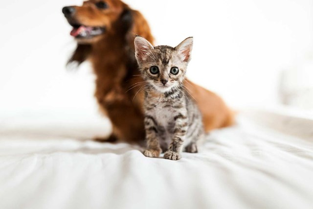 This one factor determines whether you'll be a dog or cat person