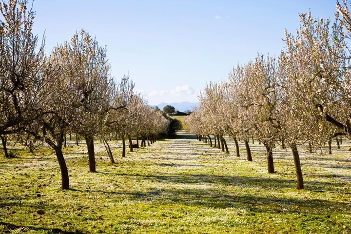 How To Prune Fruit Trees Lemons Apricots More Better Homes And Gardens