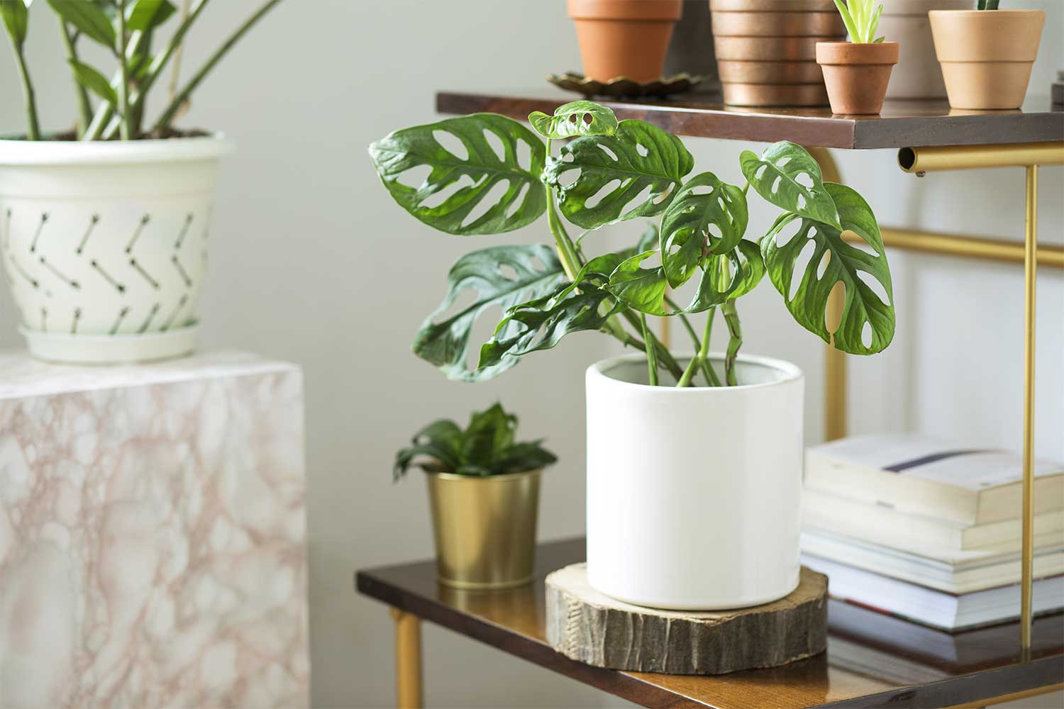 Best 20 indoor plants at Bunnings   Better Homes and Gardens