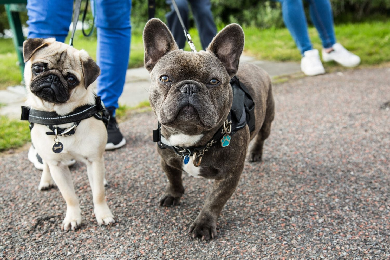 Best Dog Harness: Top 10 Harnesses in Australia