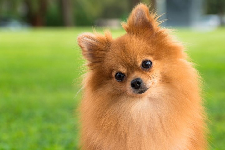 Small Dog Breeds Our 15 Best Little Dogs Better Homes And Gardens