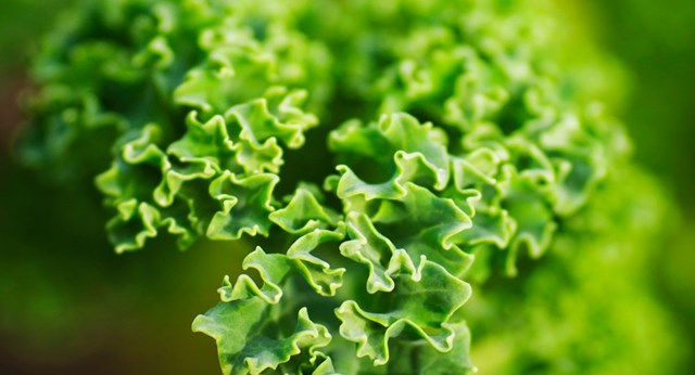 What's all the fuss about Kale?