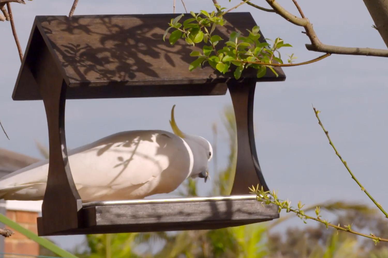 Adam builds a bird feeder