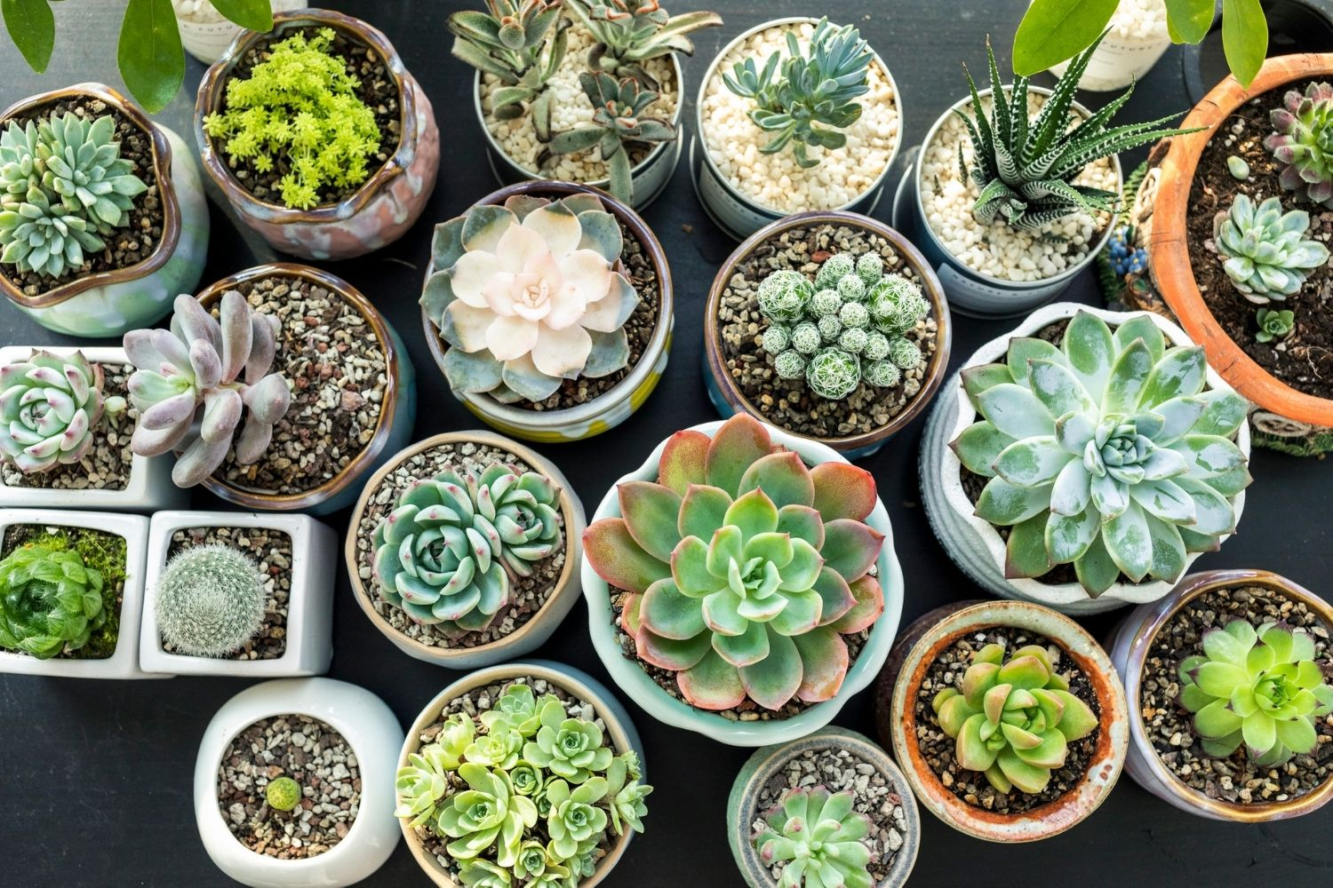 Succulent Plants 11 Types Of Succulents Better Homes And Gardens