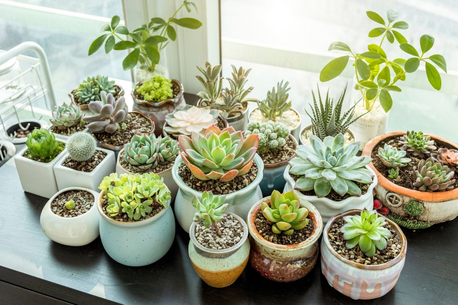 How To Grow Succulents From Cuttings Better Homes And Gardens