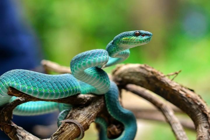Snake Repellent Do Snake Repellers Work Better Homes And Gardens