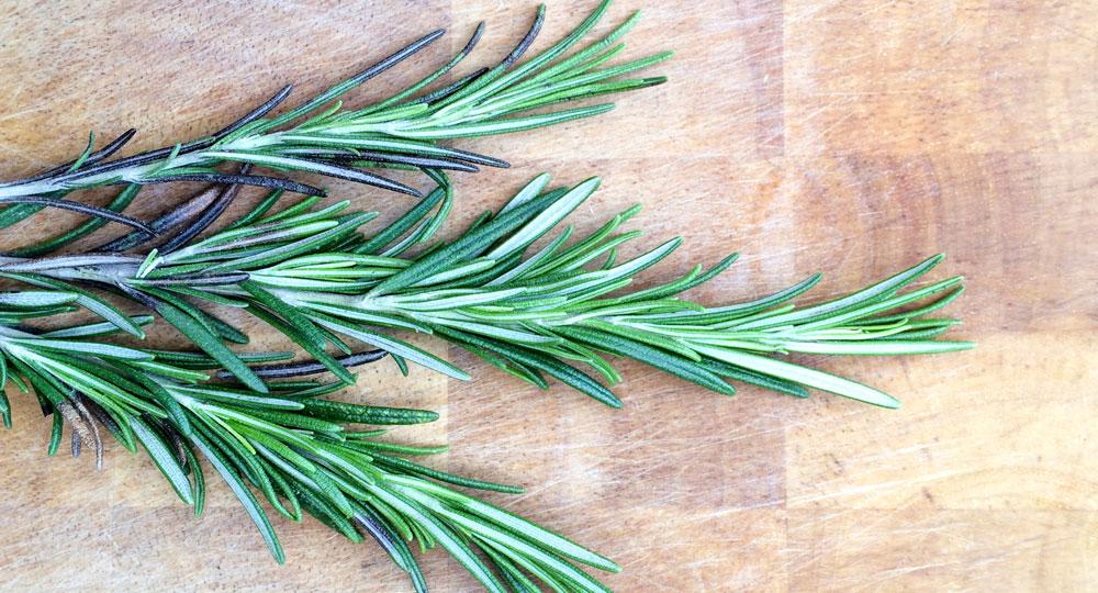 How To Propagate Rosemary Diy Gardening Craft Recipes
