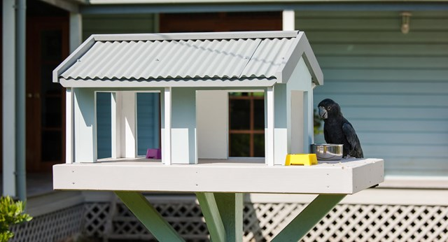 Build a haven for your backyard bird visitors
