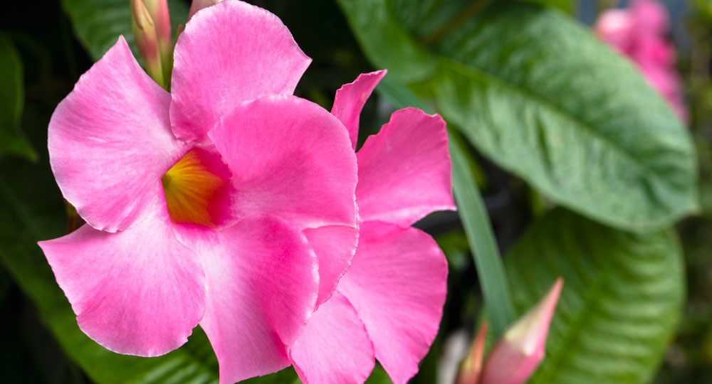 What Flowers To Plant This Summer Better Homes And Gardens