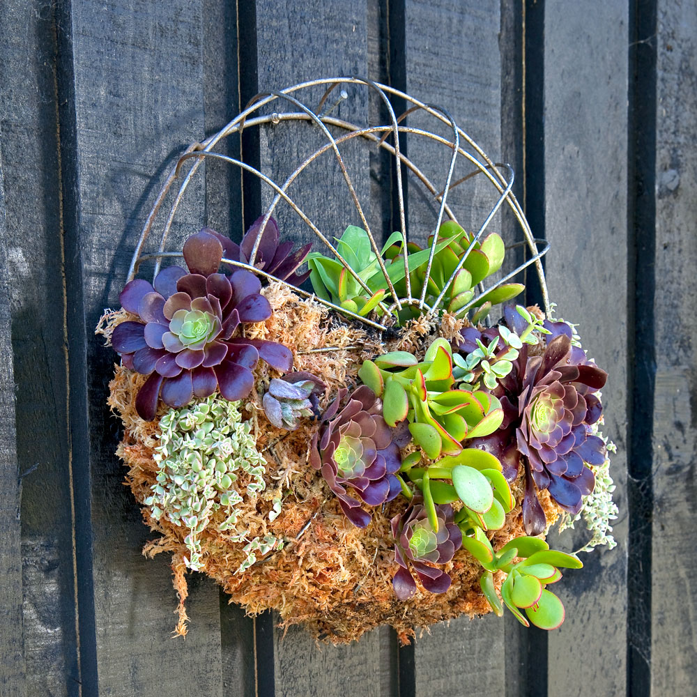 Diy Succulent Potting Mix Australia: How To Make A Planter From A Fan