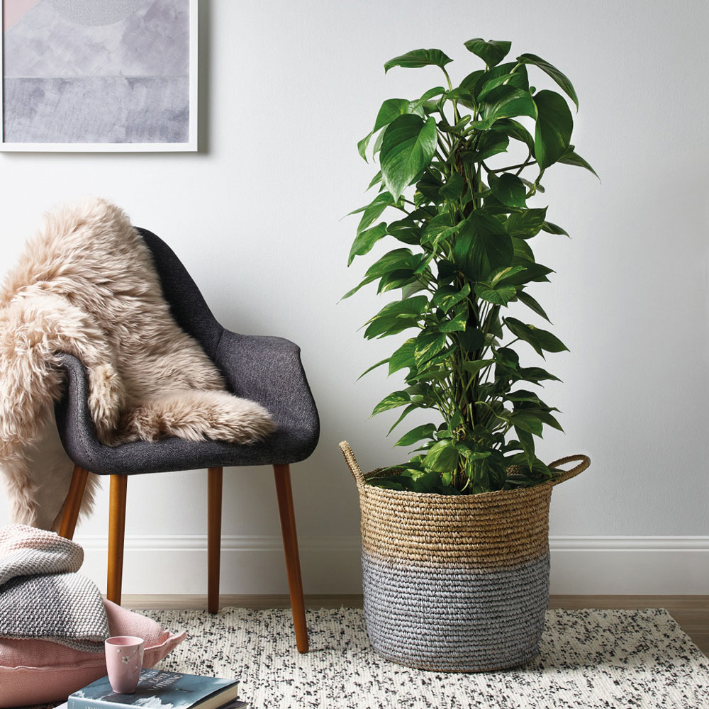 How To Paint An Indoor Plant Basket Better Homes And Gardens