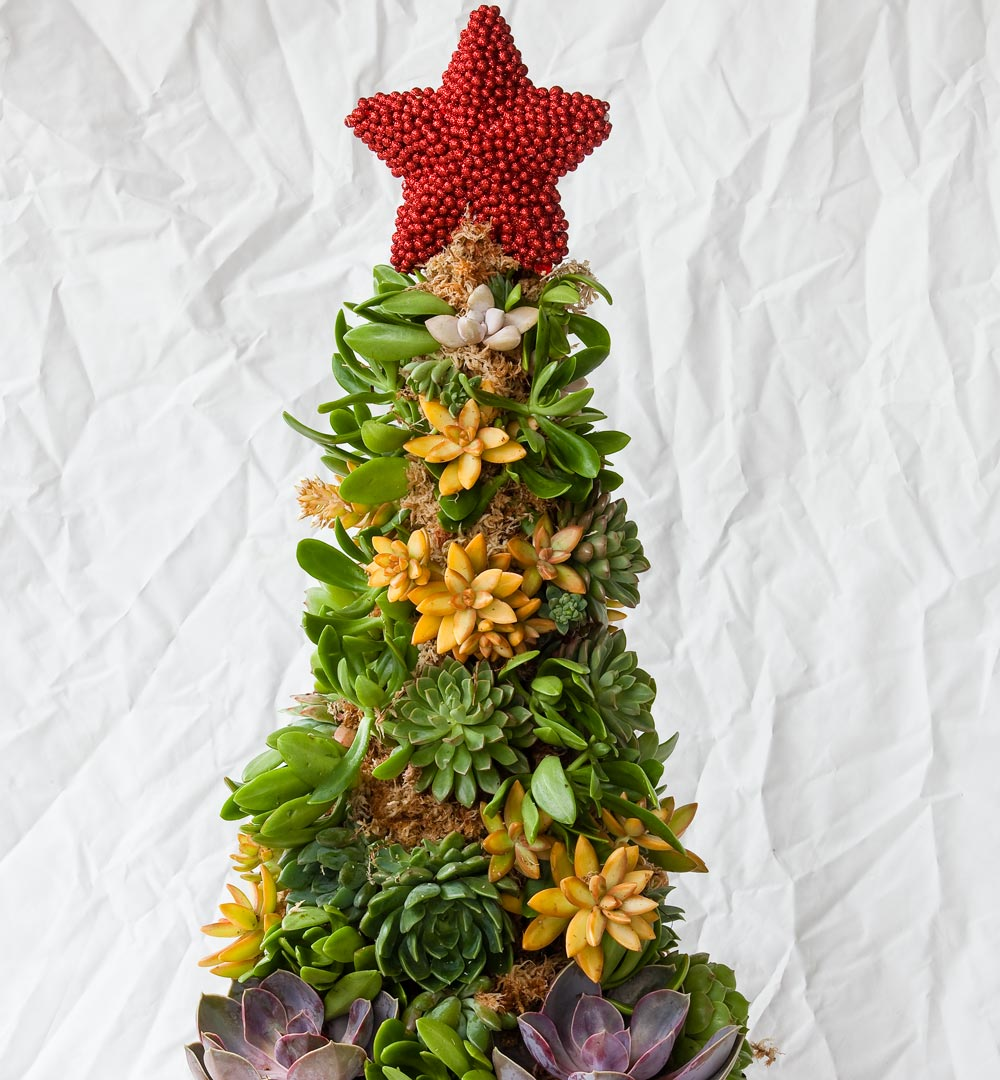How To Make A Succulent Christmas Tree Better Homes And