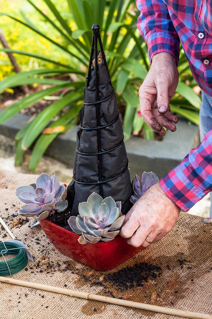 How to make a Christmas tree out of succulents | Better