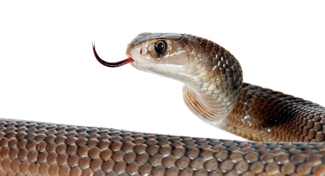 Snakebite dos and don'ts